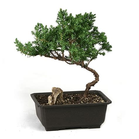 desk plants that don t need sunlight sunlight how much light is enough for indoor plants