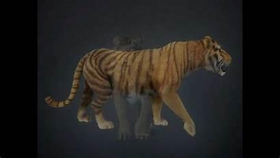 3d Tiger Animals Obj C4d 3ds Max