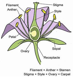 Blank Diagram Of A Flower