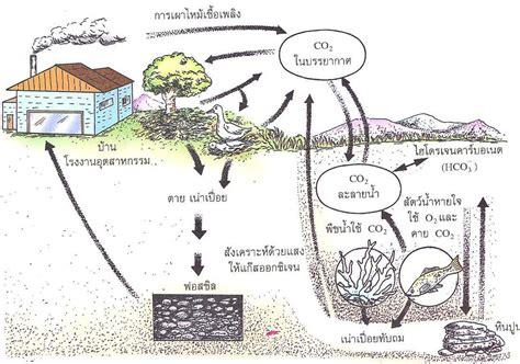 ระบบนิเวศ: วัฏจักรคาร์บอน