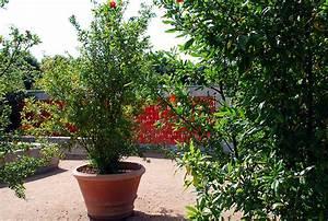 Arbuste Persistant En Pot : d coration arbuste persistant en pot saint denis 16 ~ Premium-room.com Idées de Décoration