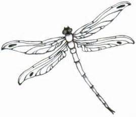 basic outlines of dragonflies best dragonfly outline 5039 clipartion com