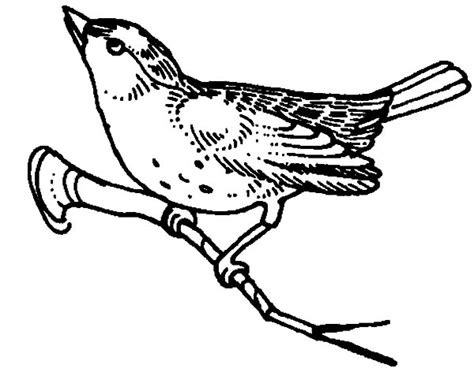 85 Northern Mockingbird Coloring Pages Set Of 4