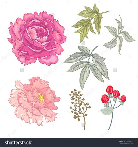 peony clipart japanese peonies clipart clipground