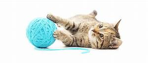 Site De Discussion : jouer avec son chat pour entretenir sa forme purina ~ Medecine-chirurgie-esthetiques.com Avis de Voitures