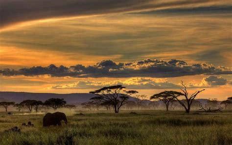 African Safari, Animals, Trees, Sunset, Grass, Clouds ...