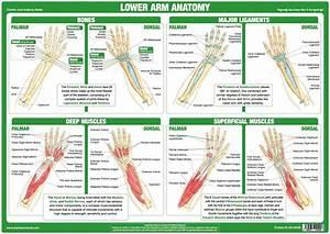 Human Body Joint Anatomy Charts