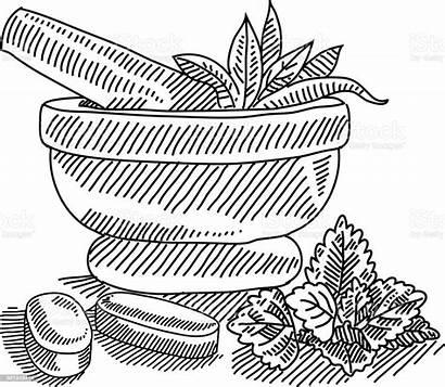 Medicine Herbal Drawing Mortar Pestle Sketch Clipart