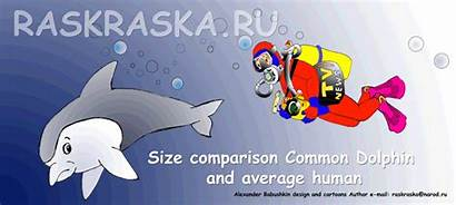 Dolphin Average Human Comparison Common Cartoon Raskraska
