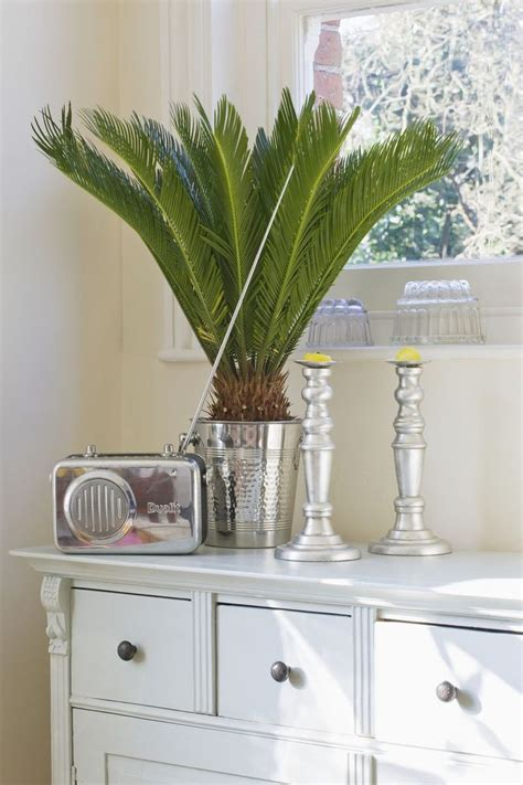 low houseplants plants survive indoor plant grow palm need housebeautiful sago sunlight indoors without getty japanese darkest corner even well