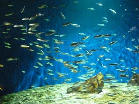aquarium rochelle 28 images d 233 couvrez la magie de