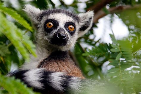 Why Keeping Exotic Animals as Pets Threatens the Survival