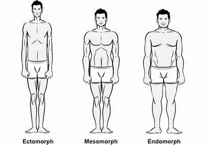 Endomorph Mesomorph Ectomorph Types Three Health Muscle