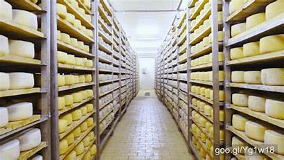 Cheese Factory Footage 4k Succeed Did July