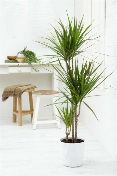 Blühende Zimmerpflanzen Pflegeleicht by Zimmerpflanzen Pflegeleicht Und Auch F 252 R Anf 228 Nger Geeignet