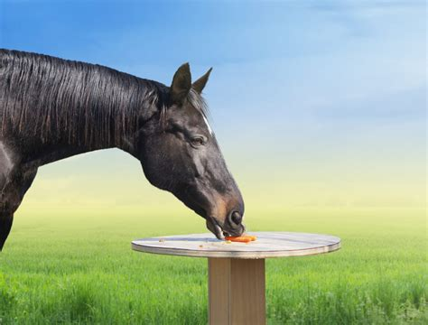 diet horse feeding naturally horses greenpet natural