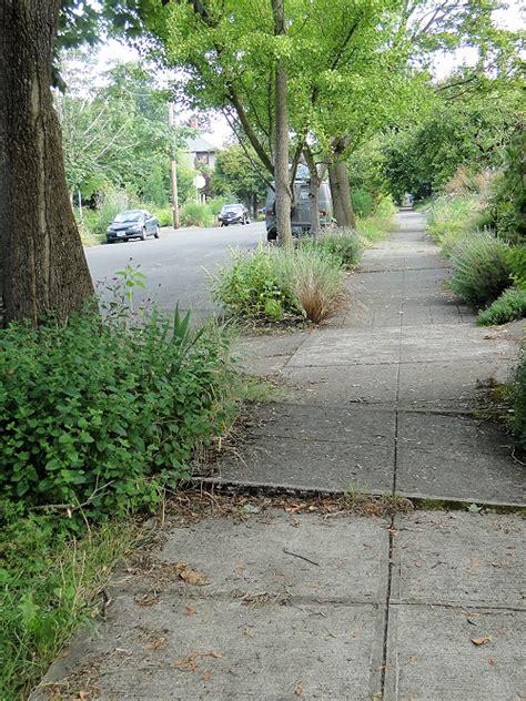 sidewalk uplift walkable neighborhoods making plannersweb roots tree uplifted
