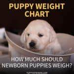 Newborn Puppy Weight Chart Puppy In Training Page 2 Of 122 Puppy Training Tips