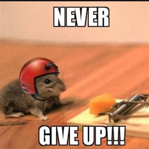Never Give Up Meme - salty memes comedymemecenter instagram photos and videos