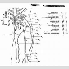 Nervous System Drawing At Getdrawingscom  Free For Personal Use Nervous System Drawing Of Your