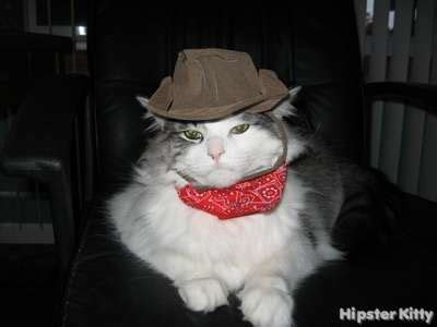 High quality cowboy cat gifts and merchandise. Hipster Kitty - Pictures of hipster cats doing hipster ...