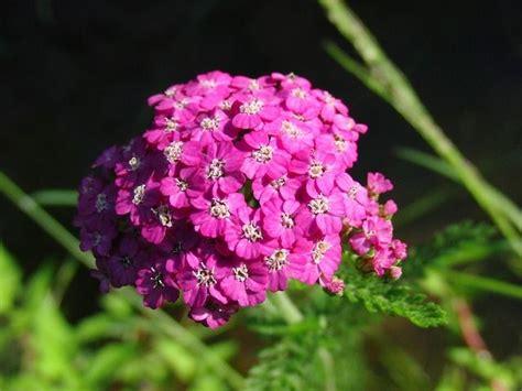 Garten Pflanzen Sonne by Hitzebest 195 164 Ndige Pflanzen Die Die Sonne Lieben Garten