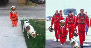 Dog Astronaut Costume Page Pics About Space Dog Beds and ...