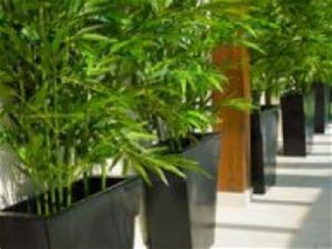 plante pour pot exterieur pot pour plante exterieur