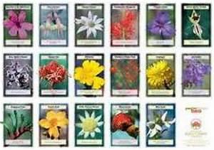 se soigner avec les fleurs de bach With affiche chambre bébé avec signification fleurs de bach