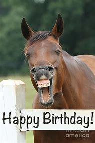 Best Happy Birthday Horse Ideas And Images On Bing Find What You