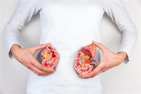 In fact, it is so tightly packed into the ribcage that a slight impression is often left on the top of the liver. Causes Of Pain In Right Side Under Ribs And Treatment - Charlies Magazines