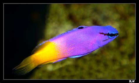 1 er avril journ 233 e du poisson je vous presente l aquarium de n 233 mo