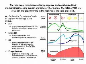 6 6 Hormones  Homeostasis And Reproduction