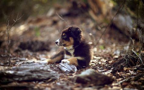 dog animals puppies depth  field baby animals