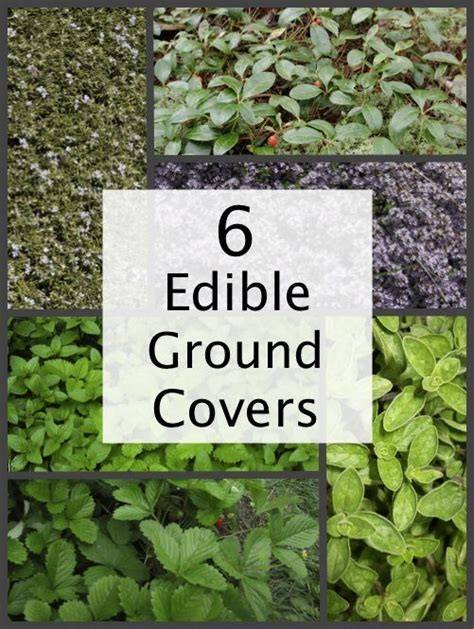 best 25 edible plants ideas on edible