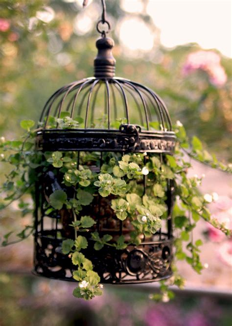 amazing collection  eye catching birdcage planters