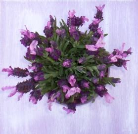 wedding lavender  lavender fanatic lavender wedding flowers