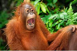 Hilarious pictures of laughing animals - Daily Record  Laughing