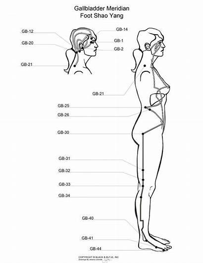 Meridian Acupuncture Gallbladder Points Massage Bladder Gall