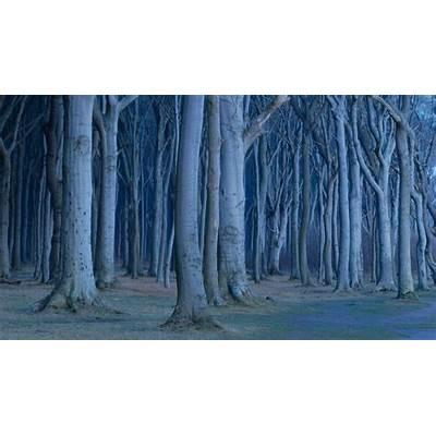 Coastal beech forest Nienhagen Germany (© Sandra