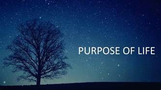 rvage purpose of official videoclip