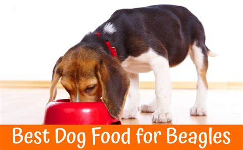 reviews  buyers guide    dog food