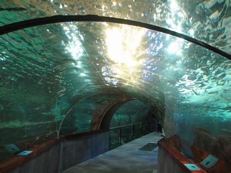 aquarium palacio mar de donostia san sebasti 225 n san sebastian tourist attractions