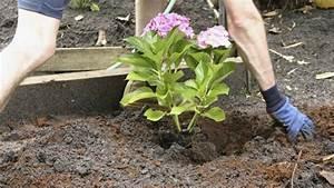 Blühende Pflanzen Winterhart : bl hende str ucher im garten pflanzen tipps ~ Michelbontemps.com Haus und Dekorationen