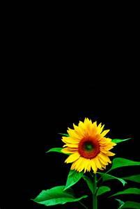 photography of kurt shaffer photographs flowers on black