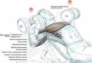 Как накачать мышцы и похудеть за неделю