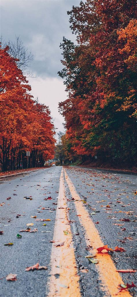 Autumn wallpapers, backgrounds, images 240x320— best autumn desktop wallpaper sort wallpapers by: Pin on Phone
