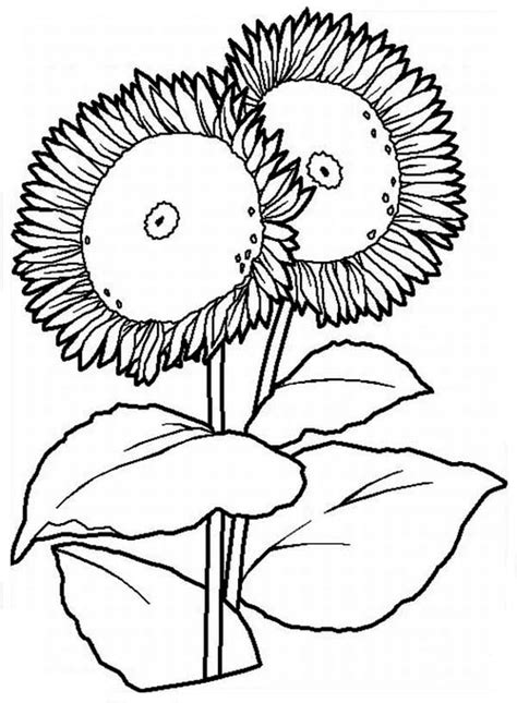 big sunflower coloring page  print  coloring pages   color nimbus