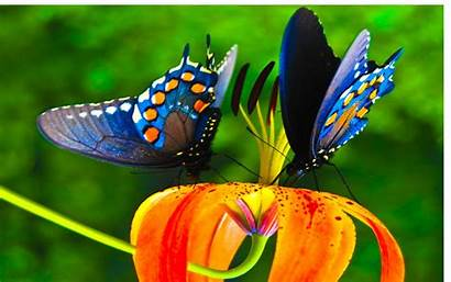 Butterfly Colorful Nice Wallpapers Background Butterflies Colors