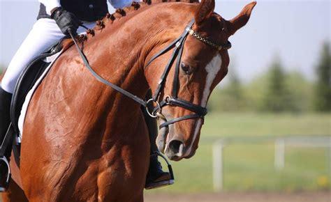 bewerbung als pferdewirtin tipps und hinweise